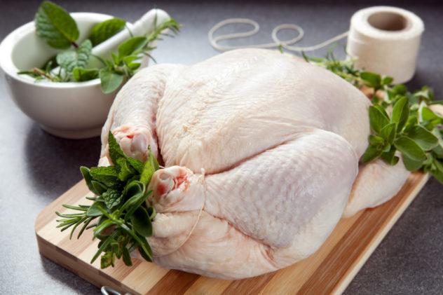 Kuře svázané